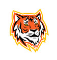 bengal tiger head mascot vector image