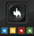 Camel icon symbol Set of five colorful stylish vector image