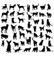 cat and dog silhouettes collection vector image vector image
