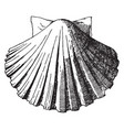exterior scallop shell was used as a water basin vector image vector image
