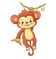 monkey hangs on a branch vector image vector image