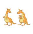 set kangaroos vector image