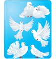 Set of white pigeons vector image
