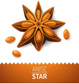 anise star vector image vector image