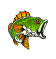 bass fish big perch perch fishing design element