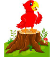 cartoon cute parrot on tree stump vector image vector image