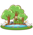 ducks in pond on white background vector image vector image