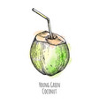 ink sketch of young green coconut vector image vector image