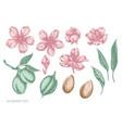set hand drawn pastel almond vector image