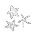 set starfish three types sea star vector image