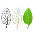 three kinds of a leaf vector image