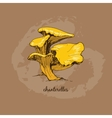 Chanterelles vector image