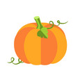 pumpkin with leaves poster vector image