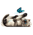a kitten is playing with butterfly wall sticker vector image vector image