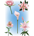 Collection of lily vector image vector image