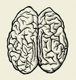 hand drawn human brain vector image