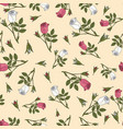 seamless pattern with damask rose ornamental plant vector image