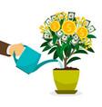 hand watering money tree vector image