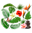 big collection tropical leaves and plant vector image vector image