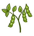 big soybean plant icon hand drawn style vector image vector image