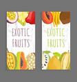 mamey citron sugar apple pomelo brochure vector image