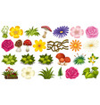 set ornamental plant vector image vector image
