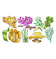 collection algae seaweed coral set vintage vector image
