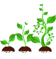 plant growth vector image vector image