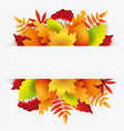 banner with autumn leaves berries and white backg vector image