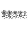 hand-drawing peonies vintage engraving vector image vector image