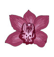 pink orchid hand drawn vector image vector image