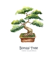 Tree Bonsai vector image