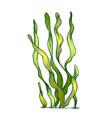 underwater organism algae seaweed doodle