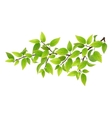 Tree branch with green leaves vector image