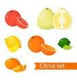 cartoon citrus set icons isolated fruits vector image vector image