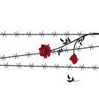 rose with barbed wire vector image vector image