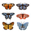 set with isolated butterflies handdrawn design vector image