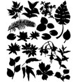 silhouette set branches flowers and leaves plant vector image