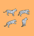 tigers wild cat set light blue safari vector image