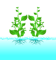 water plant vector image vector image