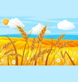 wheat in fields landscape with ear harvest vector image