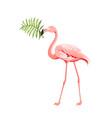 beautiful tropical image with pink flamingo vector image vector image