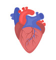 heart organ vector image