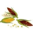 Three Ears of Corn with Husk and Silk vector image vector image