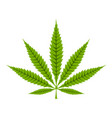 cannabis leaf icon vector image