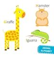 letter g h i giraffe hamster iguana zoo alphabet vector image
