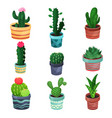 houseplant set various plants and flowers in pots vector image