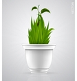 green sprout flower herb in the pot vector image