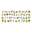 collection of fresh ripe organic vegetables vector image vector image