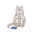 cute white cat pet animal sitting near bowl hand vector image